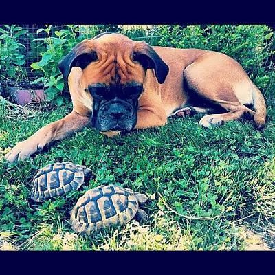 Cheap Photograph - Judy Loves Turtles by Lukas Reschauer