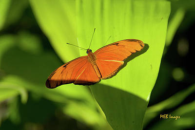 Photograph - Julia Butterfly by Margaret Buchanan