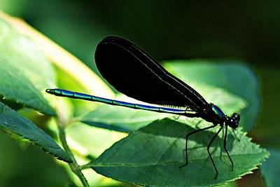 Photograph - July Dragonfly II by Joe Faherty