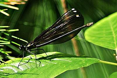 Photograph - July Dragonfly  by Joe Faherty