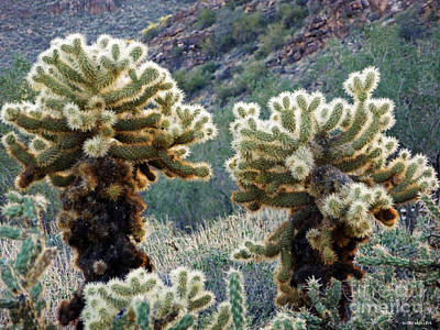 Digital Art - Jumping Cholla by Methune Hively