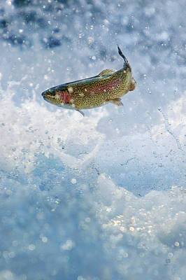 Photograph - Jumping Trout 1 by Steven Llorca