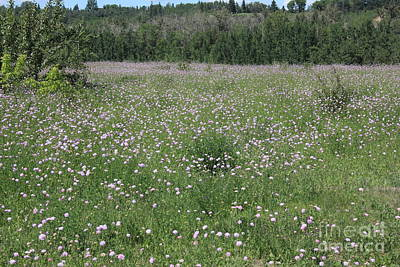 Flowers Photograph - June Meadow by Jim Sauchyn