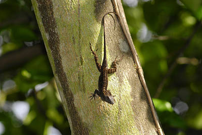 Brown Anole Photograph - Jungle Anole by David Lee Thompson