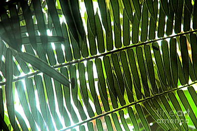 Photograph - Jungle Light by Johanne Peale