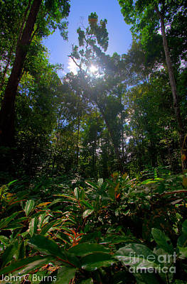 Photograph - Jungle Meadow by John Burns