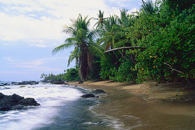 Osa Wall Art - Photograph - Jungle Meets The Pacific Ocean by George Oze