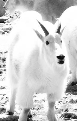 Wall Art - Digital Art - Junior Mountain Goat by Bill Kennedy