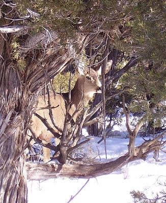 Juniper Deer Art Print by FeVa  Fotos