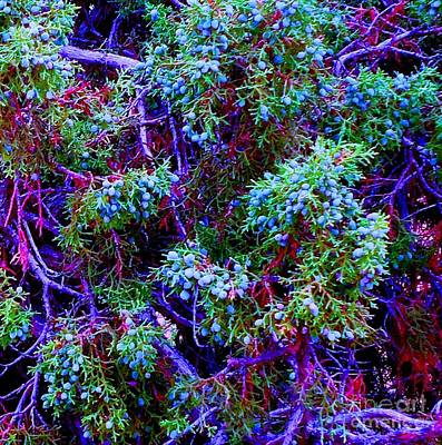 Art Print featuring the photograph Juniper Neurons by Ann Johndro-Collins
