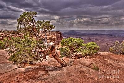 Photograph - Junipers Storm by John Kelly