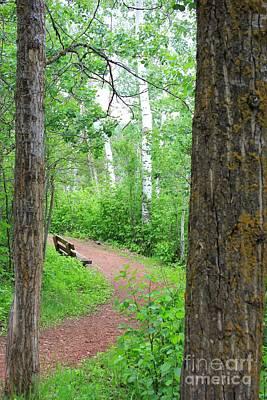 Woodlands Photograph - Just Around The Corner by Jim Sauchyn