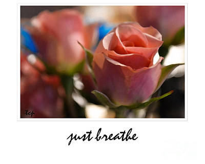Photograph - Just Breathe by Traci Cottingham