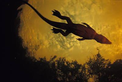 Gabon Photograph - Just Days-old, A Nile Crocodile Makes by Michael Nichols
