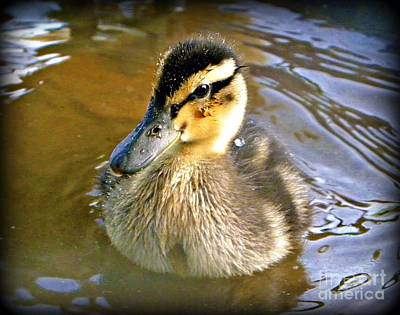 Found Round And About Photograph - Just Ducky by Tisha  Clinkenbeard