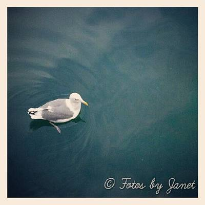 Finch Photograph - Just Floating #bird #birds #water by Janet Ortiz