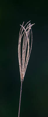 Photograph - Just Grass by Alistair Lyne