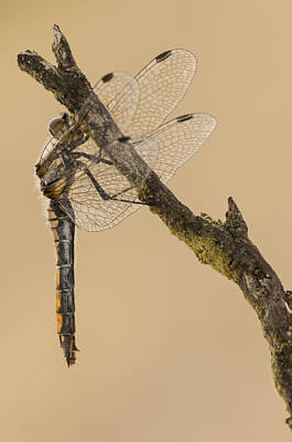 Darter Photograph - Just Hanging Around by Andy Astbury