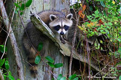 Photograph - Just Hanging Around by Barbara Bowen