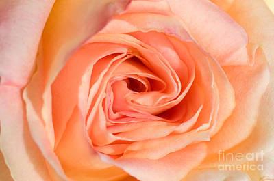 Photograph - Just Peachy by Sarah Schroder