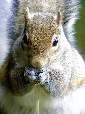 Found Round And About Photograph - Just Snackin by Tisha  Clinkenbeard