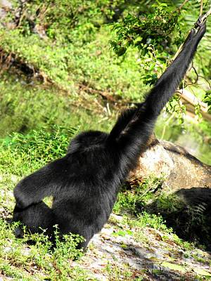 Photograph - Just Some Monkey Business by Elizabeth Hoskinson