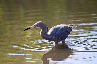 Photograph - Just Wading Around by Jeanne Andrews