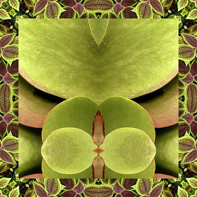 Photograph - Kalanchoe Ally by Bell And Todd