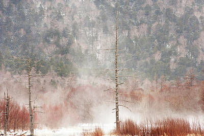 Bare Trees Photograph - Kamikochi Winter by Skye Hohmann