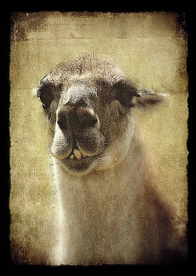 Julie Williams Digital Art - Karma Llama by Julie Williams