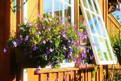 Photograph - Kathy's Violet Basket by Kelly Nicodemus-Miller