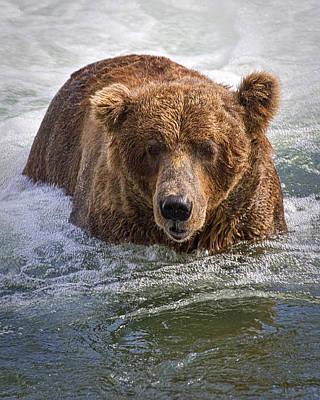 Katmai Bear Art Print