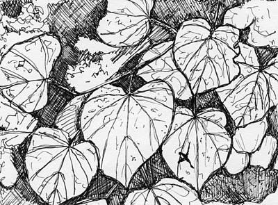 Katsura Wall Art - Drawing - Katsura by Elizabeth Thorstenson