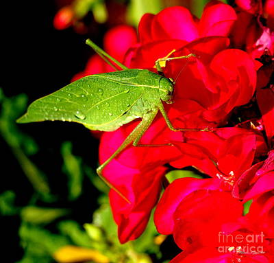 Photograph - Katydid On Geranium - A Nature Paintograph by Christine S Zipps