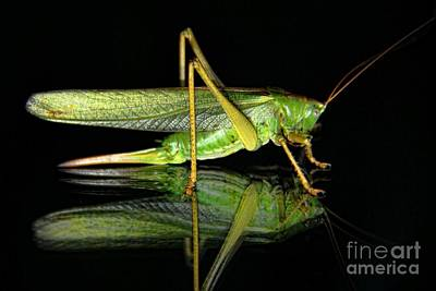 Katydid Reflection Art Print by Kasia Bitner
