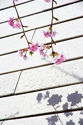 Kawadu Sakura Art Print by Privacy Policy