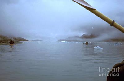Photograph - Kayaking In Glacier Bay, Alaska by Greg Dimijian