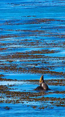 Kelp And Sea Lion Art Print by Adam Pender