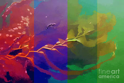 Photograph - Kelp Pallette by Tom Griffithe