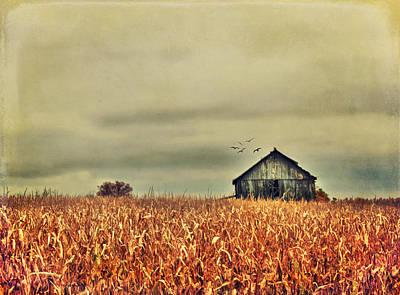 Kentucky Corn Field Print by Darren Fisher