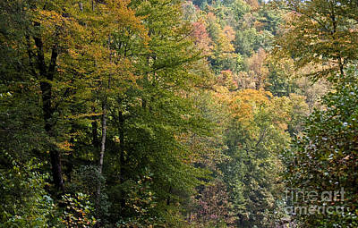 Photograph - Kentucky Forest At Fall by Olivier Steiner
