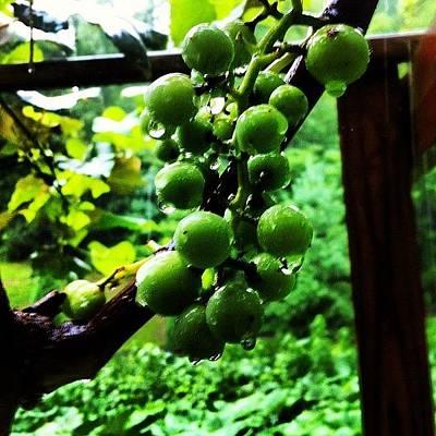 Vineyard Photograph - Kentucky Rain #vineyard by Andrew Pennington