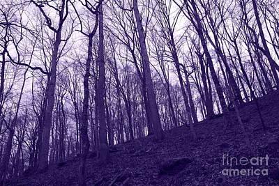 Going Green - Kentucky Trees in Winter by Carol Groenen