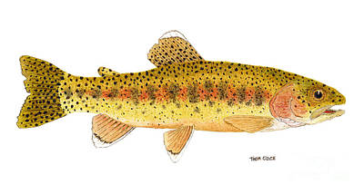 Salmon Painting - Kern River Rainbow Trout by Thom Glace