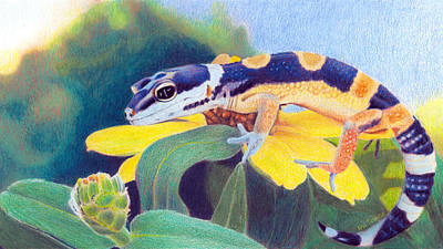 Print featuring the drawing Kiiro The Gecko by Ana Tirolese