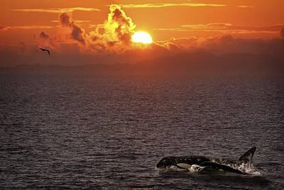 Killer Whale In The Water Art Print by Richard Wear