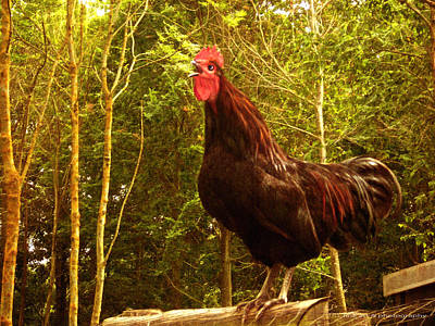Red Photograph - King Of The Barnyard - Rooster by Yvon van der Wijk