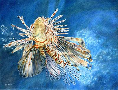 Sea Lion Drawing - King Of The Reef by Bev Lewis
