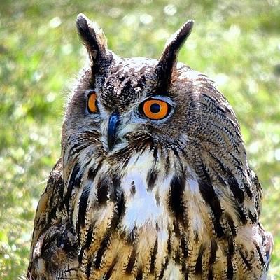 Still Life Photograph - King Owl by Chi ha paura del buio NextSolarStorm Project