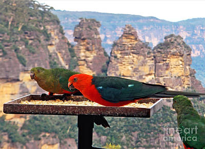 King Parrot Photograph - King Parrots And The Three Sisters by Kaye Menner